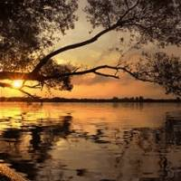 Дерево, солнце отражение на воде